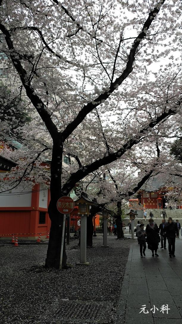 日本的國花是櫻花?菊花?都對,也都不對!